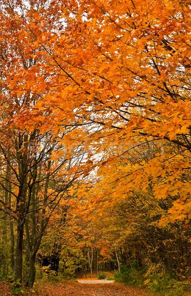 秋 森林 トラック 画像 秋 道路 ストックフォト © Kirschner