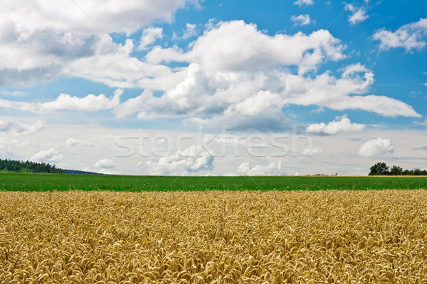 Kornfeld Bild Wiese Himmel Wolken Essen Stock foto © Kirschner