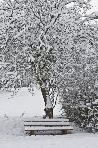 Lugar imagem árvore banco nuvens natureza Foto stock © Kirschner