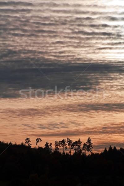 森林 画像 日没 自然 黒 植物 ストックフォト © Kirschner