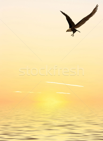 Flying Eagle Stock photo © Kirschner