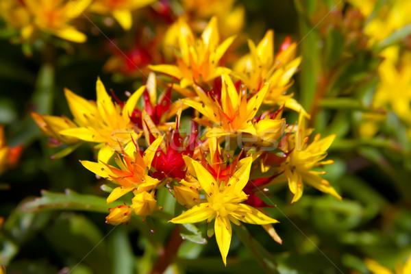 Görüntü makro çiçekler yaz kırmızı bitki Stok fotoğraf © Kirschner