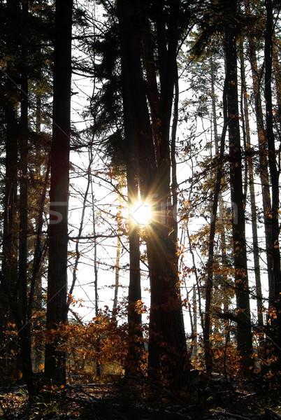 Güneş ışığı karanlık görüntü güneş orman ahşap Stok fotoğraf © Kirschner
