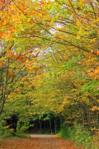 Sonbahar orman izlemek görüntü düşmek yol Stok fotoğraf © Kirschner