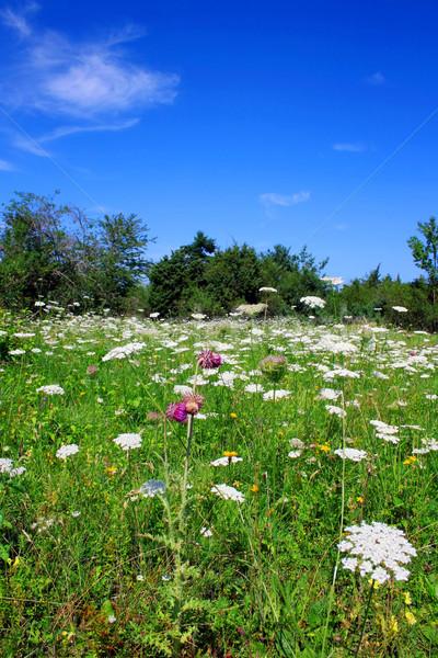 花畑 画像 草原 ツリー 草 フィールド ストックフォト © Kirschner