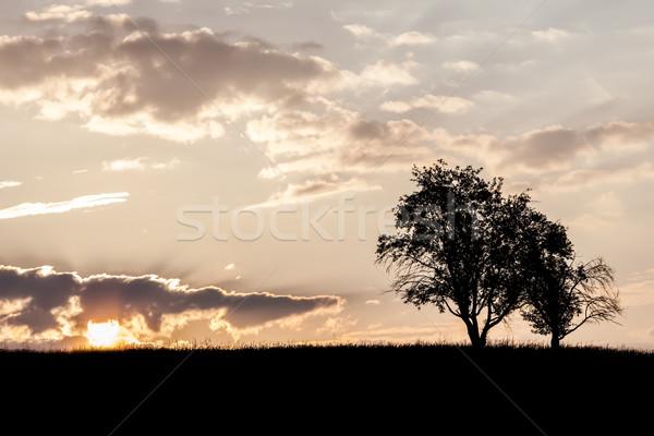木 午前 画像 日の出 空 雲 ストックフォト © Kirschner
