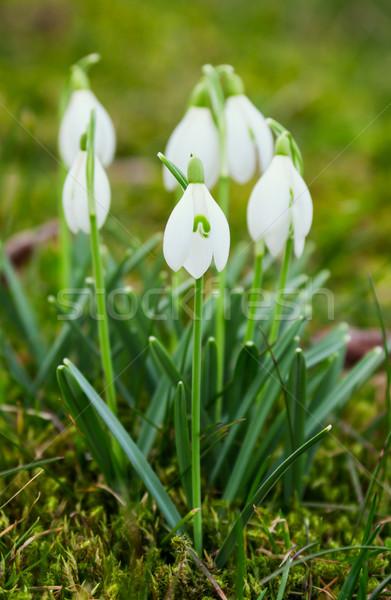 Görüntü makro çim bahçe çiçek açık Stok fotoğraf © Kirschner