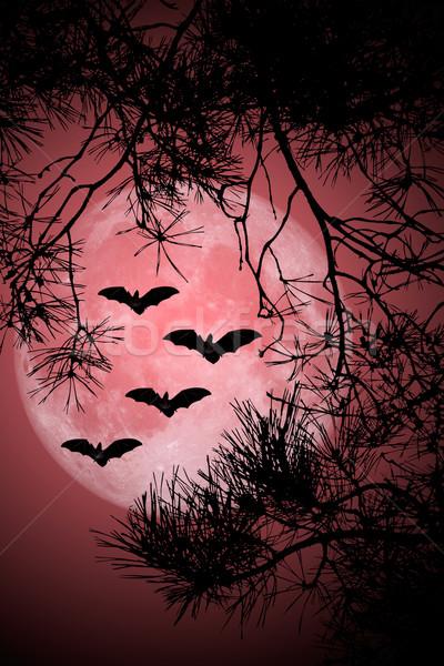 Halloween Night Stock photo © Kirschner