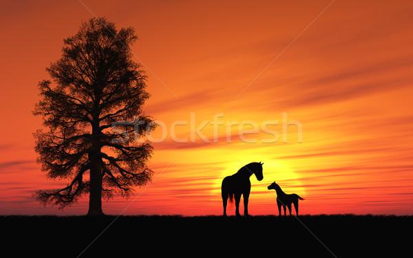 馬 画像 のどかな 日没 子馬 空 ストックフォト © Kirschner