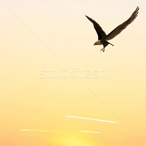 飛行 イーグル 画像 コンピュータ 生成された 日没 ストックフォト © Kirschner