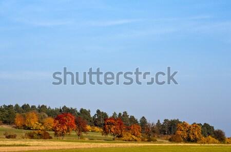 赤 ツリー 画像 秋 太陽 ストックフォト © Kirschner