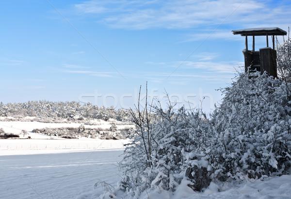 冬 画像 空 森林 自然 ストックフォト © Kirschner