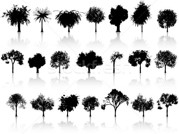 Ayarlamak ağaçlar örnek yararlı tasarımcı çalışmak Stok fotoğraf © kjolak