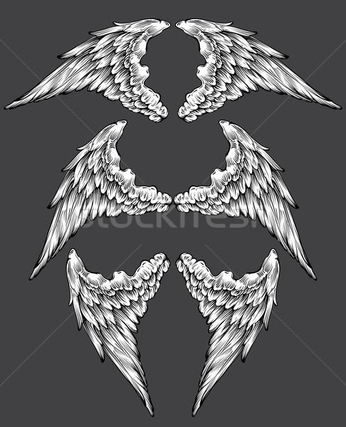 set of wings Stock photo © kjolak