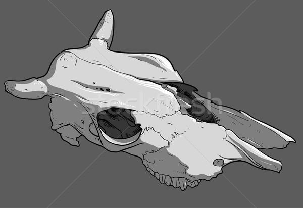 skull cow Stock photo © kjolak