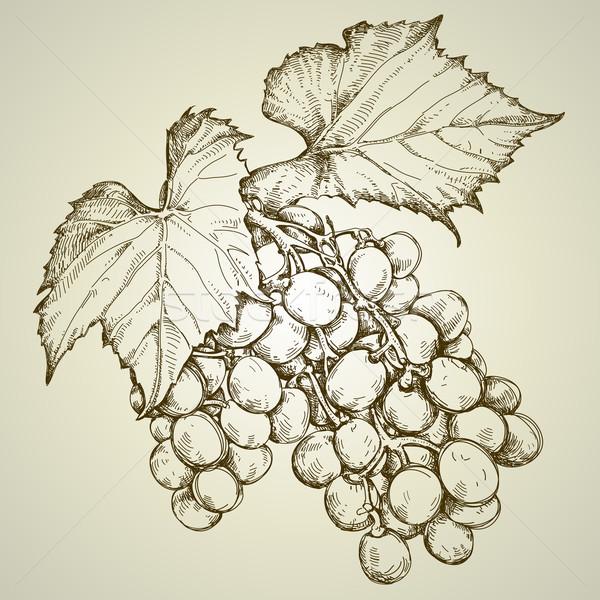 Winorośl rysunek ilustracja przydatny projektant Zdjęcia stock © kjolak
