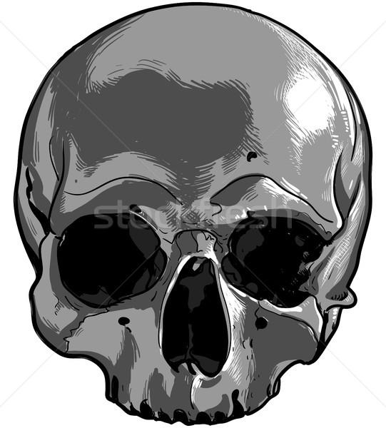 human skull Stock photo © kjolak