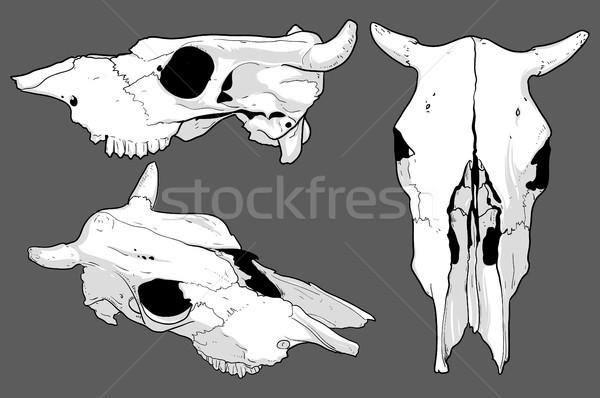 Szett koponyák tehén illusztráció hasznos designer Stock fotó © kjolak