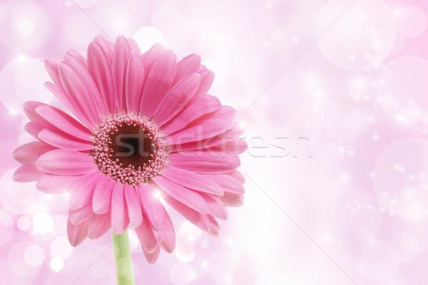 Stockfoto: Roze · bloem · voorjaar · oranje · plant