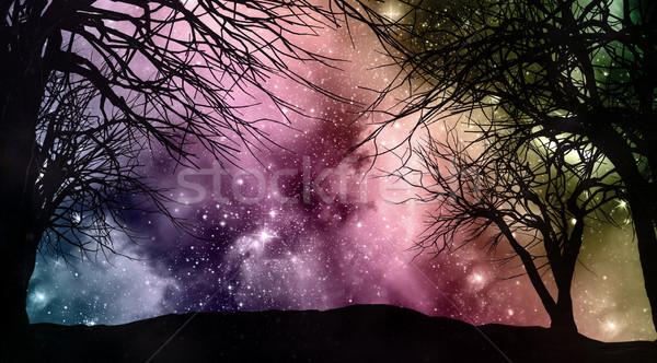 Starfield night sky with tree silhouettes Stock photo © kjpargeter