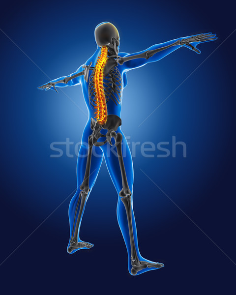 3D medical man with skeleton Stock photo © kjpargeter