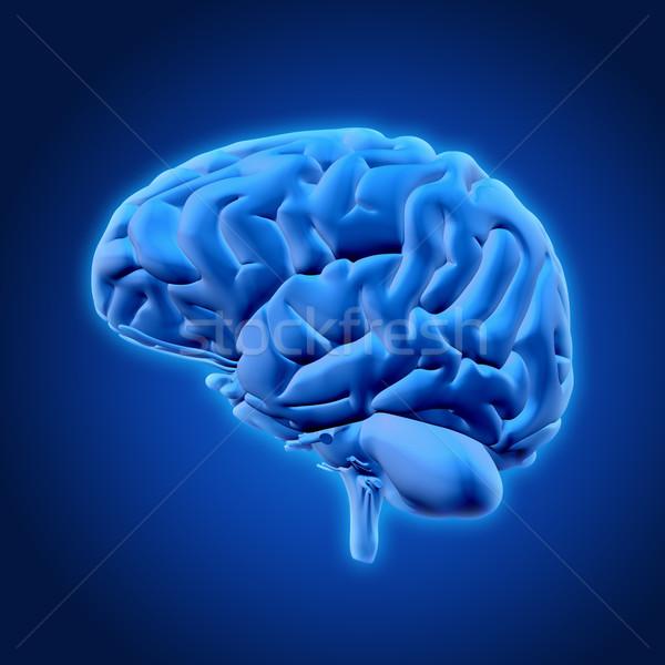 3D мозг 3d визуализации медицинской технологий Сток-фото © kjpargeter