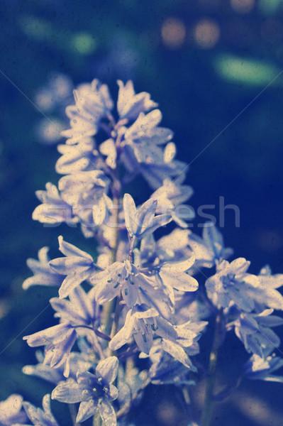 Grunge stil çiçekler instagram etki çiçek Stok fotoğraf © kjpargeter