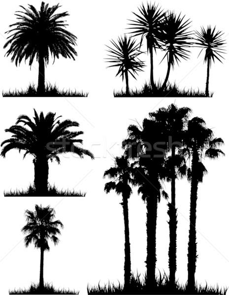 Tropicali albero sagome raccolta alberi sfondo Foto d'archivio © kjpargeter