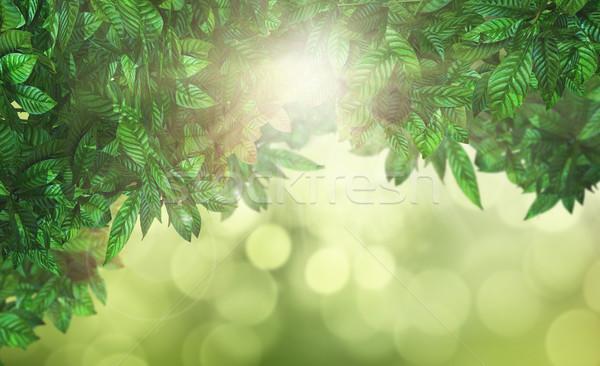 3D Leaves against a defocussed background Stock photo © kjpargeter