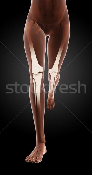 Foto stock: Feminino · médico · esqueleto · pernas · 3d · render · corrida