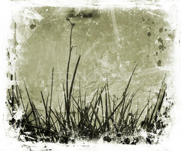 Stock photo: Grunge nature
