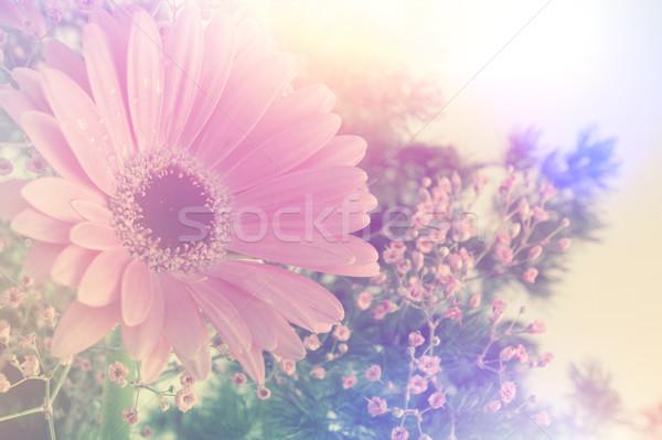 Retro Gerbera daisy image Stock photo © kjpargeter