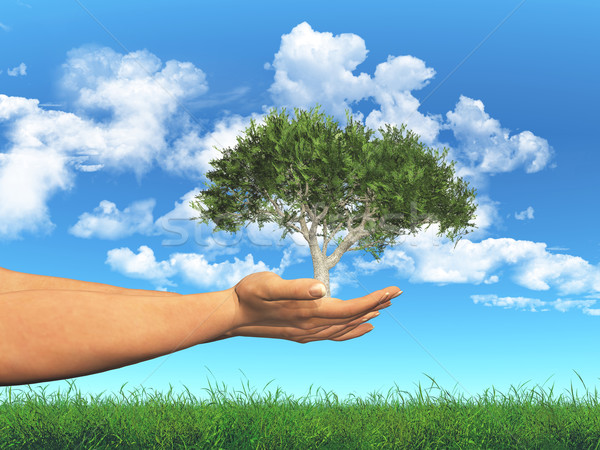 Female hands holding a tree in cupped hands Stock photo © kjpargeter