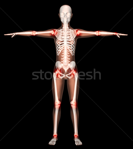 Female skeleton with joints highlighted Stock photo © kjpargeter