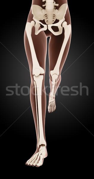Foto d'archivio: Femminile · medici · scheletro · gambe · rendering · 3d · esecuzione