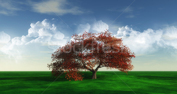 Maple Tree landscape widescreen Stock photo © kjpargeter