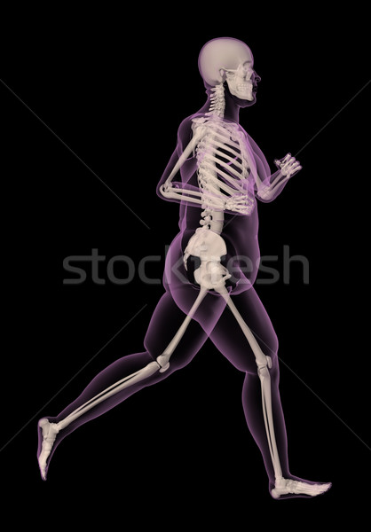 Medical skeleton of an overweight woman running Stock photo © kjpargeter