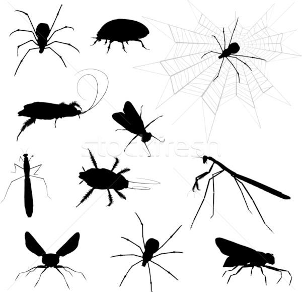 気味悪い シルエット 昆虫 ウェブ シルエット ストックフォト © kjpargeter