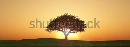 Widescreen sunset tree landscape Stock photo © kjpargeter