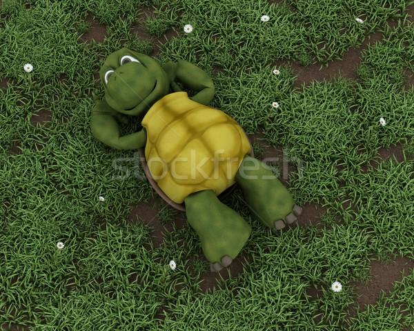 Stock photo: tortoise lying on grass in flowers