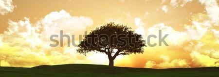 Szélesvásznú naplemente fa tájkép 3d render Stock fotó © kjpargeter