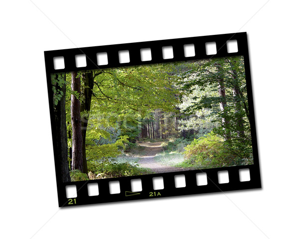 Campagna filmstrip immagine foresta abstract natura Foto d'archivio © kjpargeter