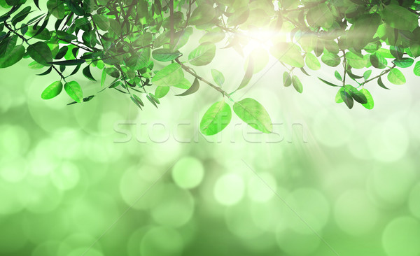 Leaves and grass against a defocussed background Stock photo © kjpargeter