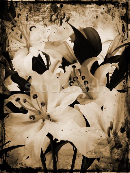 Grunge lillies Stock photo © kjpargeter