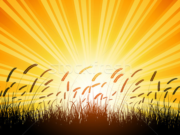 Wheat silhouette  Stock photo © kjpargeter