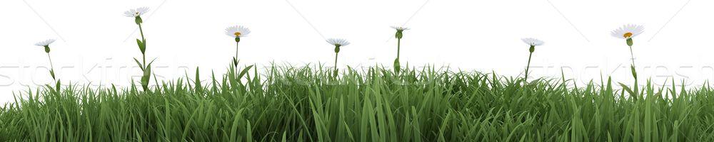 Yaz Çiçekler çiçeklenme 3d render çiçek çim yaz Stok fotoğraf © kjpargeter