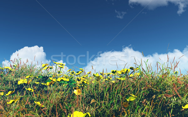 3D landscape with buttercups and grass Stock photo © kjpargeter