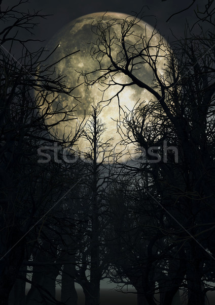 Moonlit sky with spooky trees Stock photo © kjpargeter