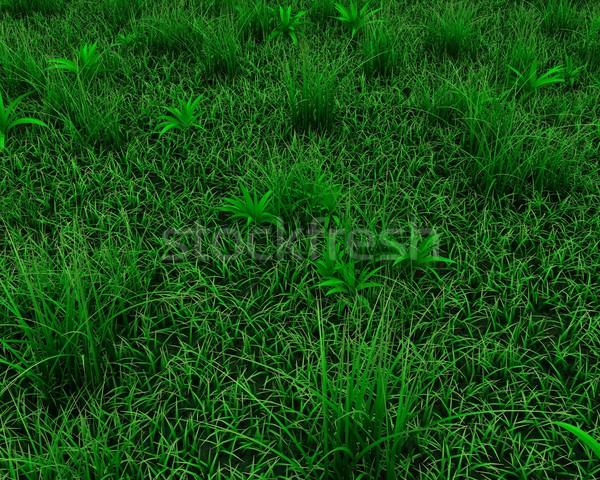 spring grass background Stock photo © kjpargeter