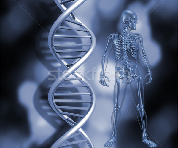 Skeleton with DNA strands Stock photo © kjpargeter